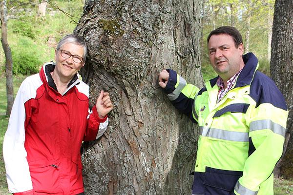 Avverkningen av parkträd får en plan