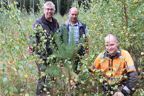 Fusionsunderhandlingarna fortsätter om skogsvårdsföreningarnas medlemmar så vill