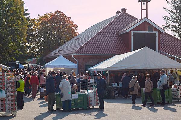 Söderlångvikin Kartanon Omenapäivää vietetään lauantaina